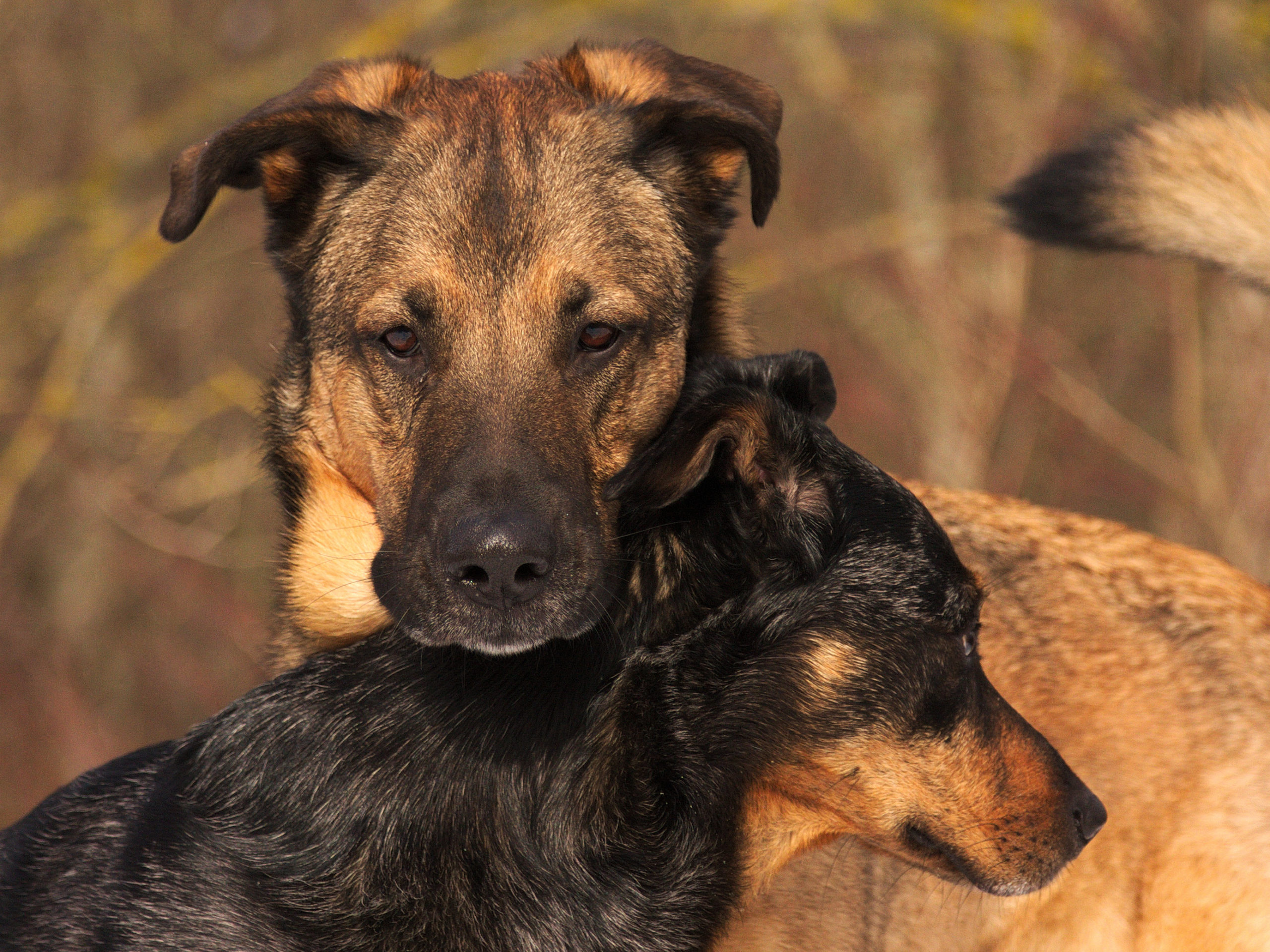 """Vortrag """"Die Körpersprache des Hundes"""""""